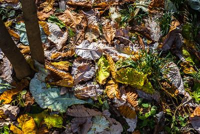 High Line Autumn Leaves