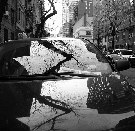 A Tree Grows in Brooklyn - Reflections on a Car - New York City Street Scene - Square version