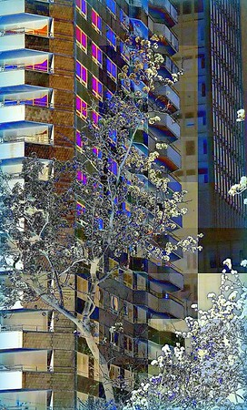 Spring Blossoms in the City of New York - Tree and Highrise