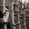 Standing Tall - St Patricks Cathedral