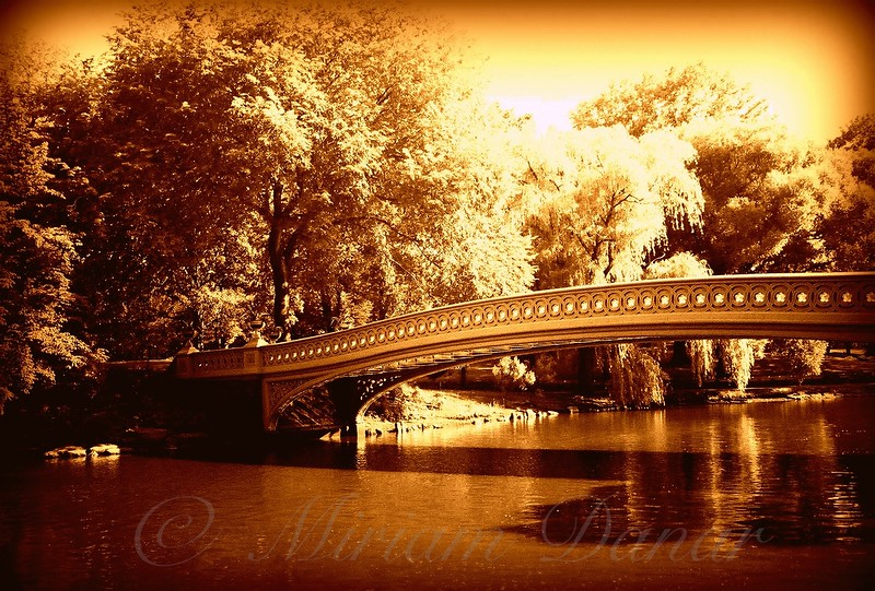 Bow Bridge, Central Park in Gold - Bridges of New York City