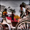 Central Park New York - Romantic Carriage Ride 2