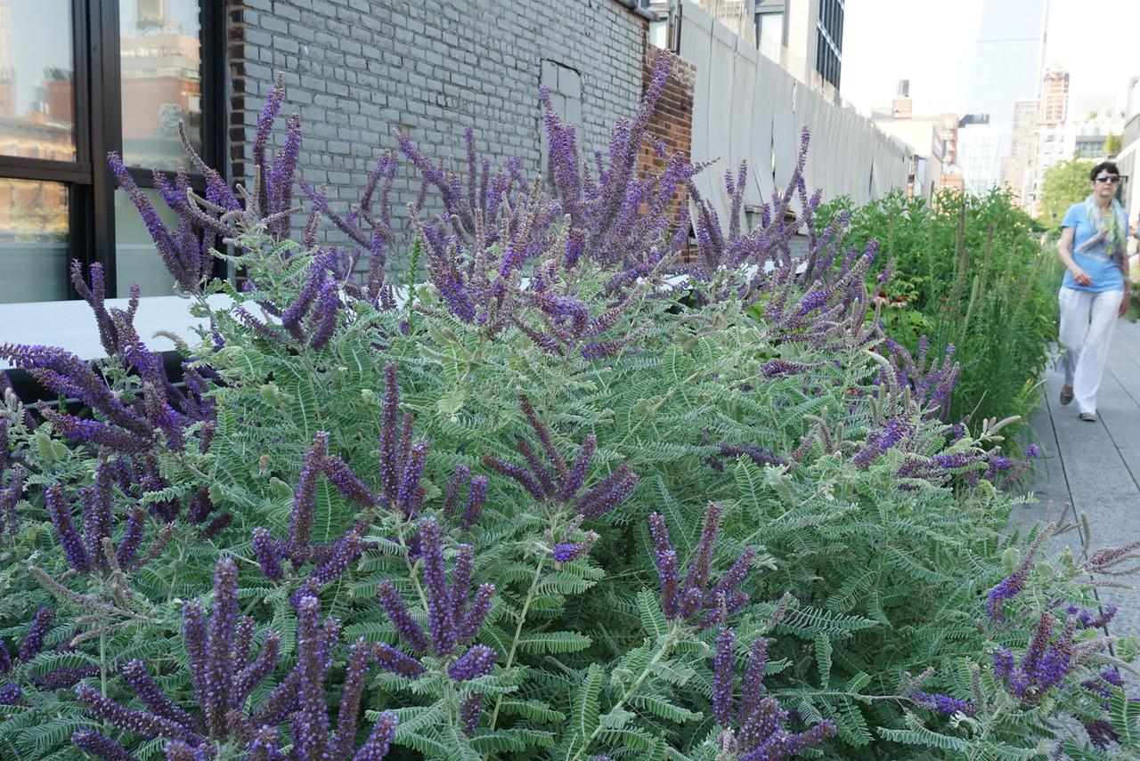 Looks like lavender(?)