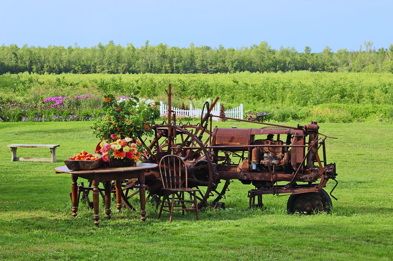 Antique Tractor and Table