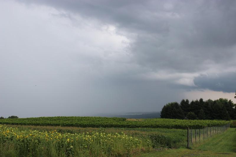 Heron Hills Vineyard