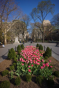 more tulips in Washington Square