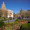tulips in Washington Square