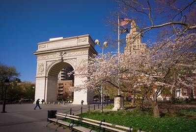 blossoms near arch in Washington Square