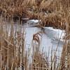 Montezuma Wetland in Winter
