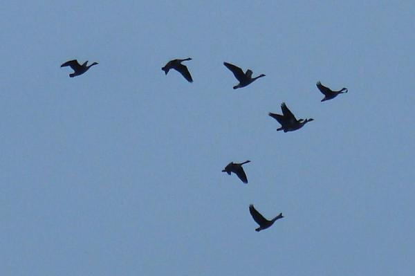 Lead Bird