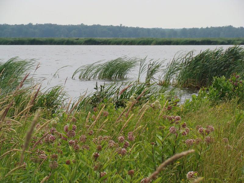 Pond and Wetland Plants
