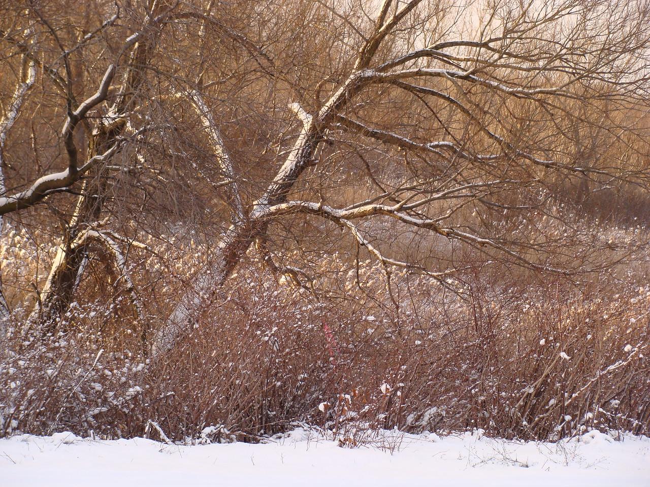 Meadowland in Winter