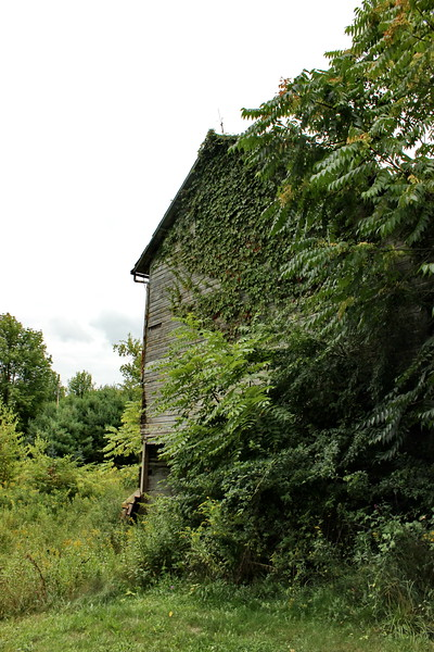 Old Overgrown Barn
