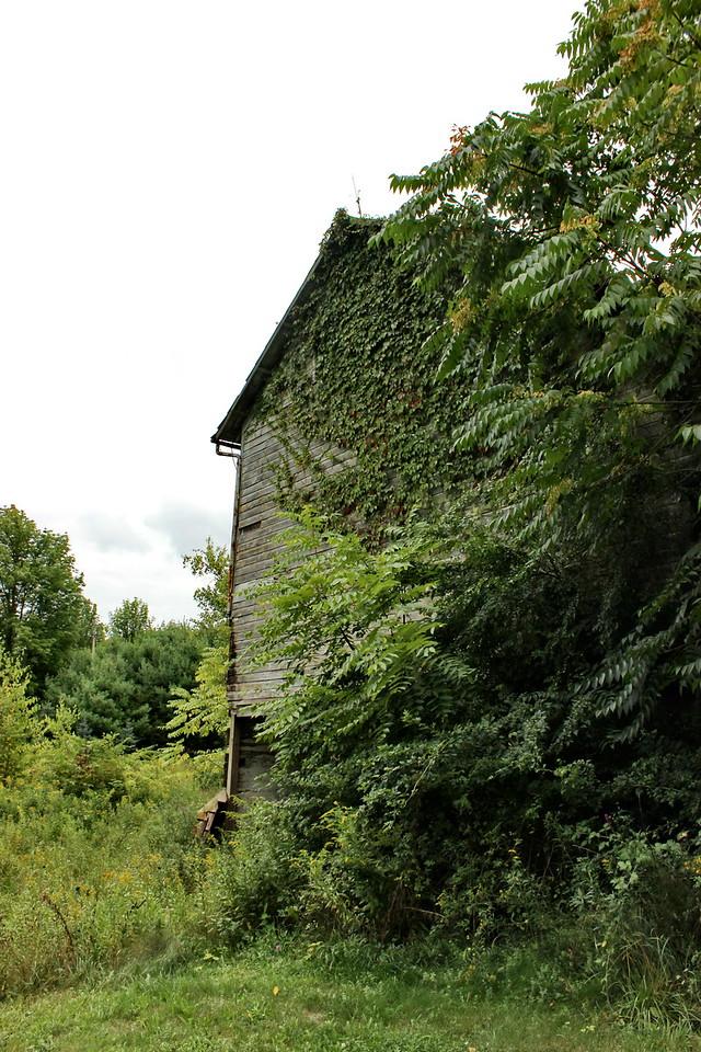 Old Overgrown Barn