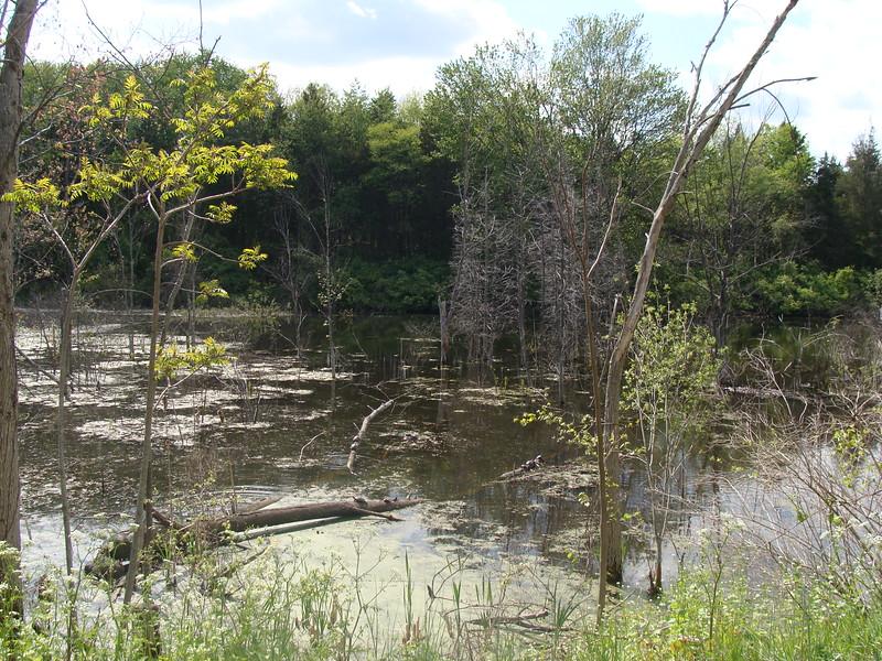 Turtles on a Fallen Branch