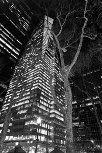 tree and Bank of America tower