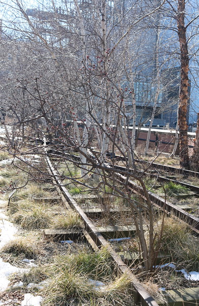 Abandoned Freight Train Tracks