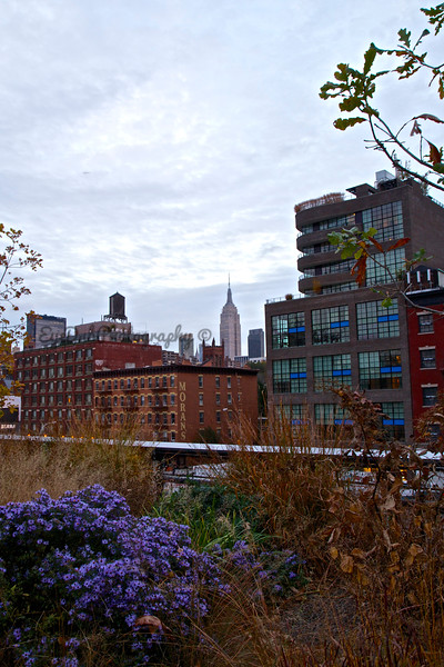 City View from the High Line