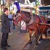 caleche driver petting horse