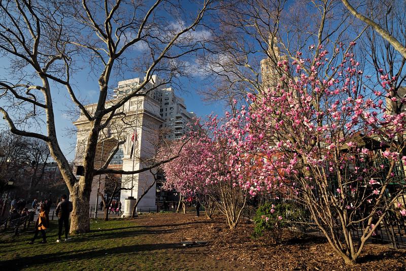 magnolias Washington Square