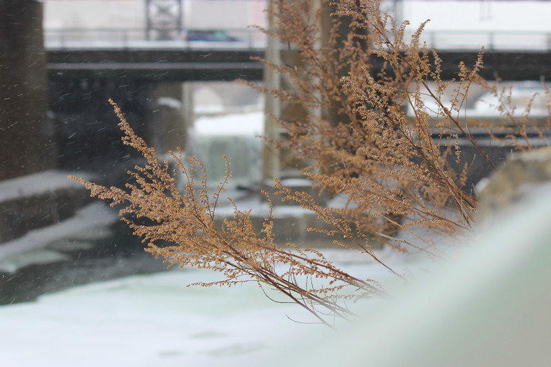 Winter at High Falls