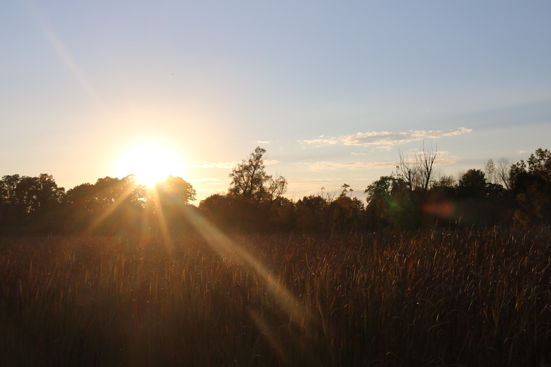 Sunset over the Wetland
