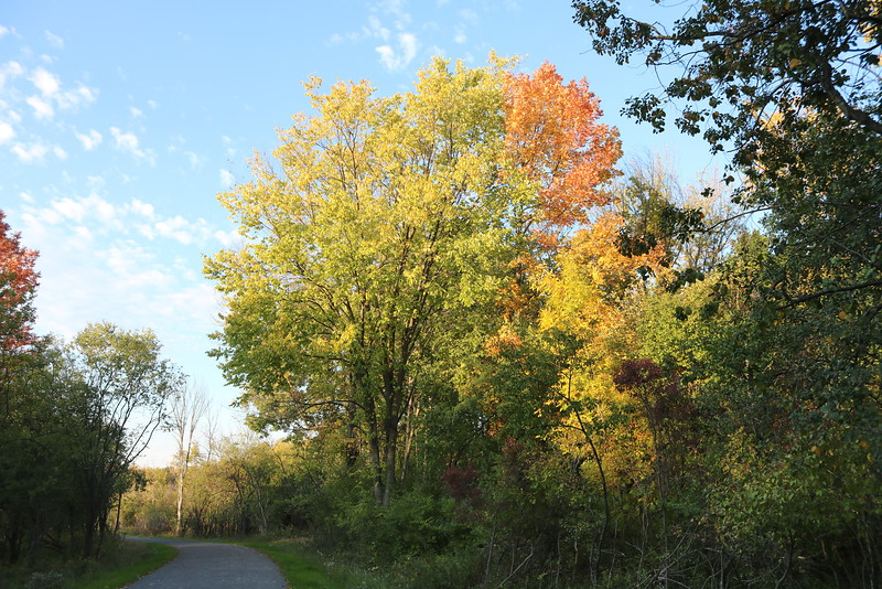 Autumn on the Brickyard Trail