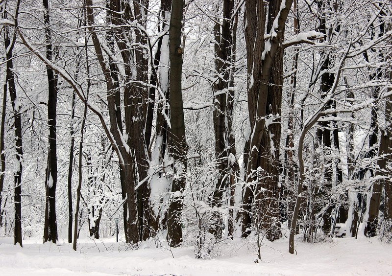 Into the Woods in Winter