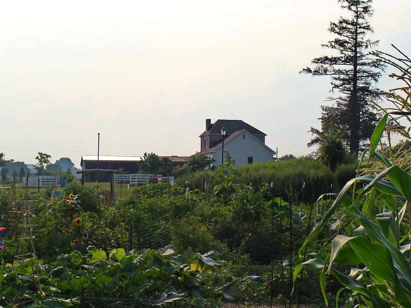 Brighton Community Garden and Buckland House