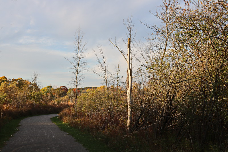 Trail in Autumn