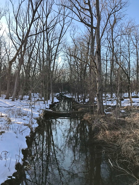 Buckland Creek in Winter