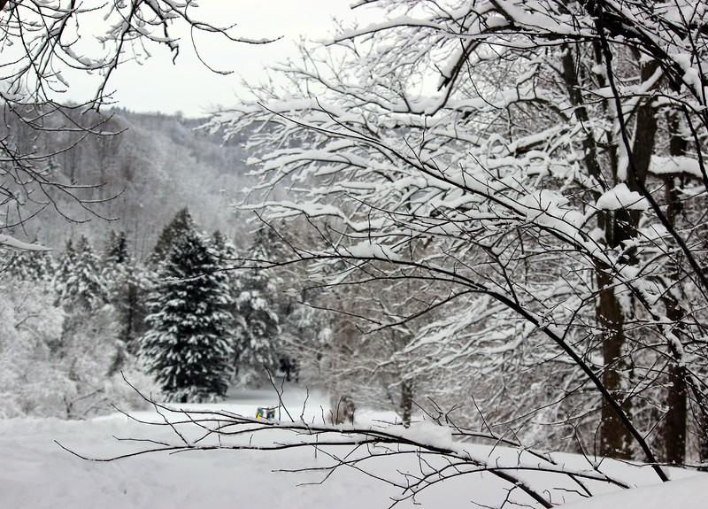 Winter at Ellison Park