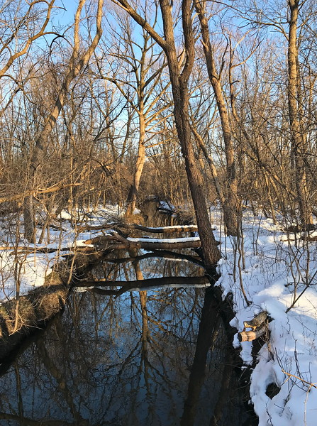 Winter Reflections in Buckland Creek