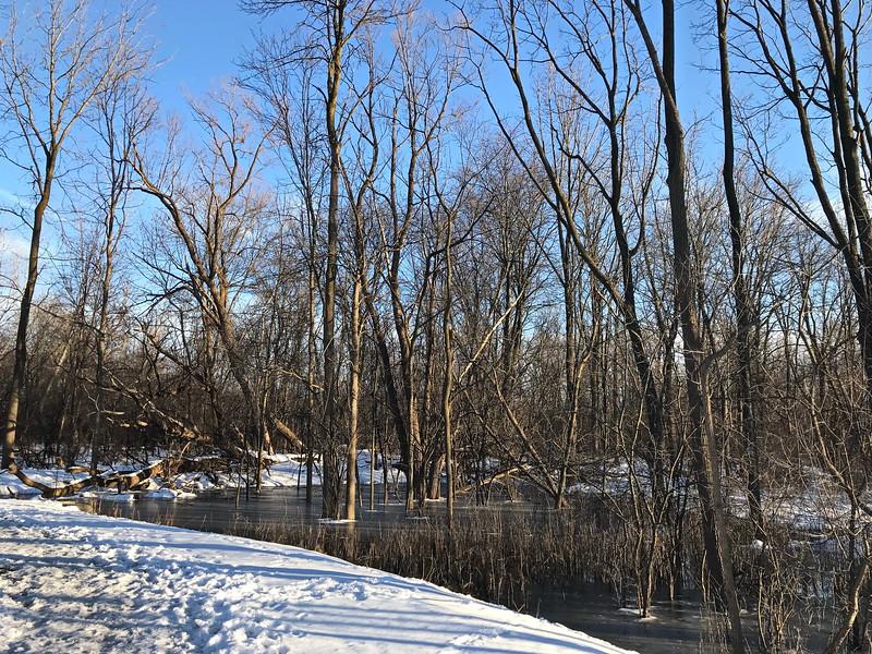 Parkland Marsh