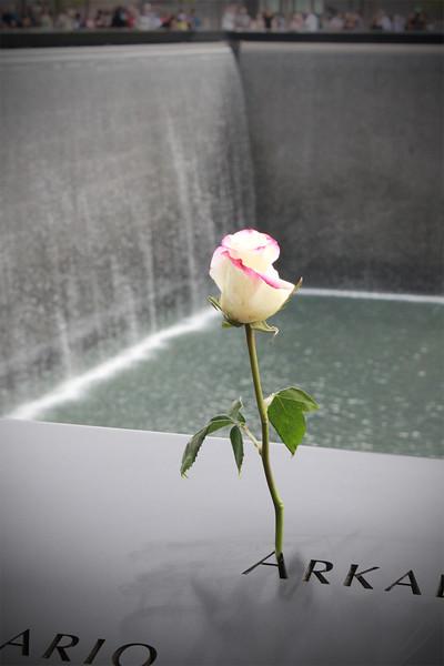 Rose ~ Ground Zero Memorial