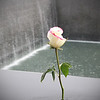 Rose ~ Ground Zero Memorial