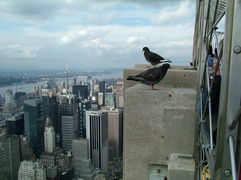 from top of Empire State Building ~ NY