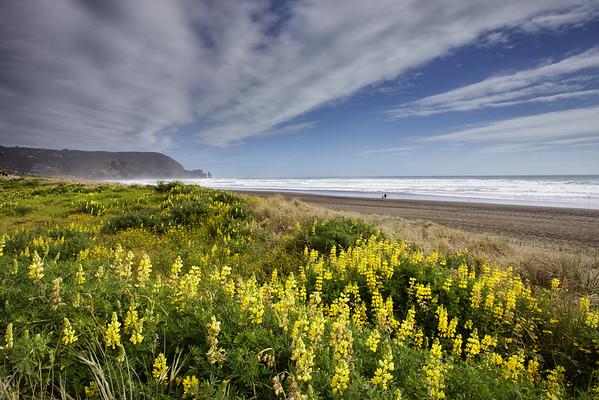 Spring flowers on Piha beach, west of Auckland