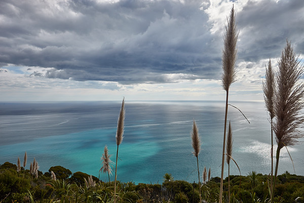 Walkway with view of the Tasman Sea on one of the walking tracks near Piha Beach in the Waitakere Ranges Regional Park west of Auckland