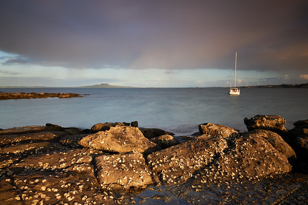 Oyster beds at low tide looking towards Rangitoto Island in Auckland's Hauraki Gulf