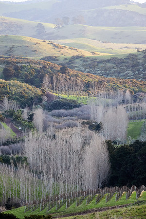 Winter countryside in the west of Waiheke Island
