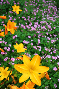 Flowers in Napier's Botanical Gardens