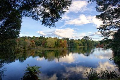 Mclaren autumn