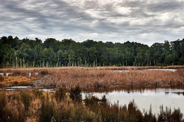 Manmade lake on the Lake Rotokura Reserve track in Tongagiro National Park, with beech forest, dead tree stumps and reeds