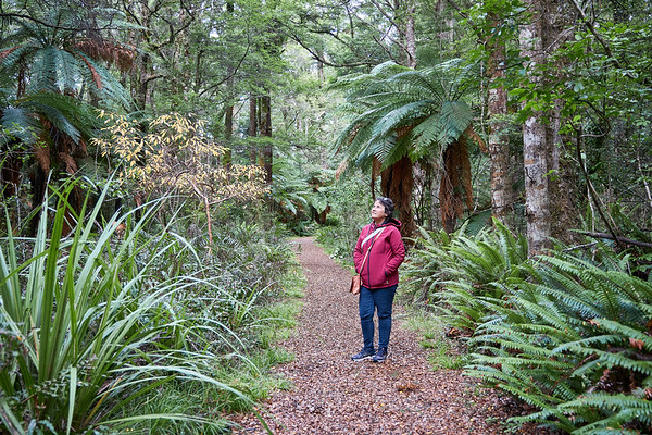Girl admiring giant ferns in Lake Rotokura Reserve in Tongagiro National Park