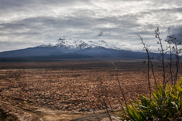 View of Mt Ruapehu over tussock grass from the Desert Road in Tongariro National Park