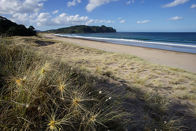 Hot Water Beach in the Coromandel