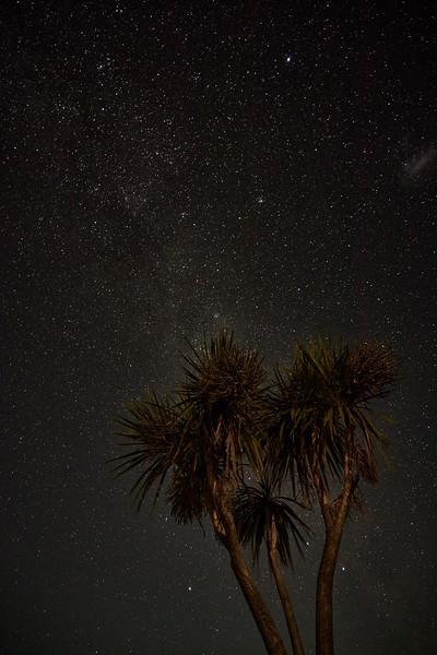 Cabbage tree and night sky