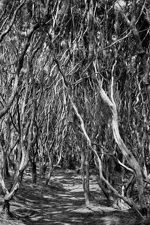 Manuka wood, Matarangi beach in the Coromandel