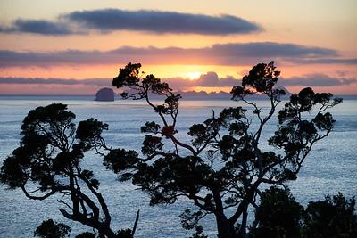 Pohutukawa Sunrise